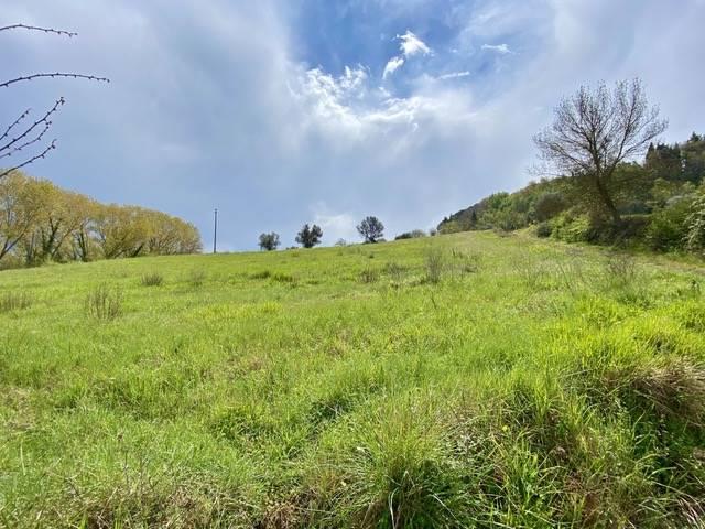 Montescudaio (PI) - Casolare con terreno
