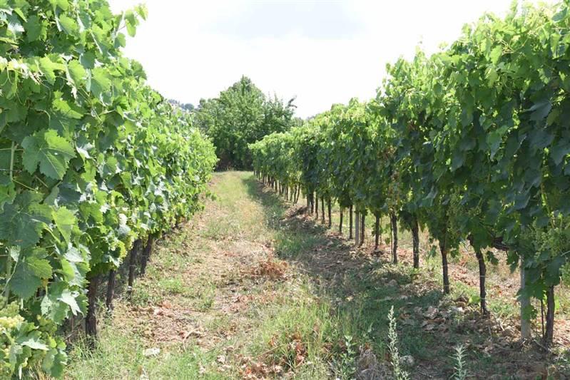 Tuscany - Terreno agricolo
